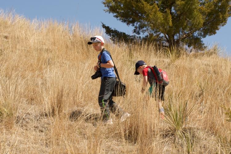Box Elder SWMA - The Nikkila boys at work looking for yucca skipper hibernacula