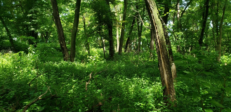 Fontenelle Forest - Habitat for Tawny Emperors and Northern Pearly Eyes
