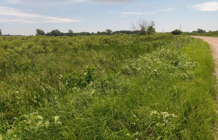 Beaver Creek Marsh - habitat for Mulberry Wing Skipper