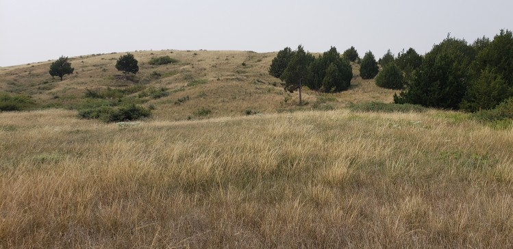 Windlass Hill at Ash Hollow State Historical Park.  The slight notch in the hilltop and depression beneath it are remnants of the Oregon Trail.  Habitat for Pawnee and Western Branded Skippers. Photo by Jonathan Nikkila