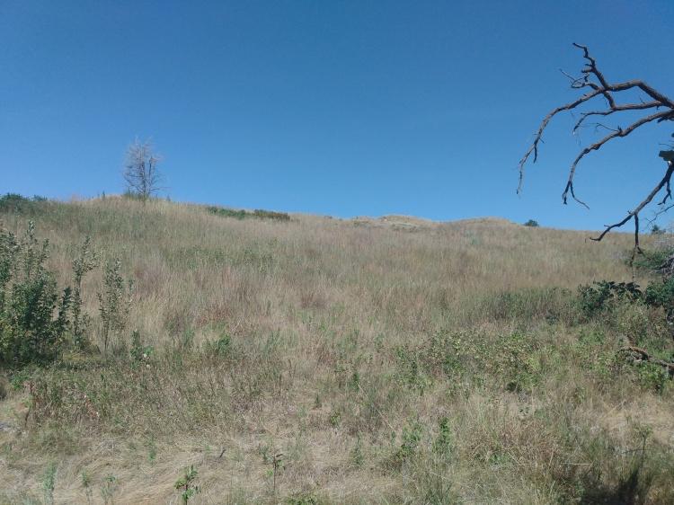 Mixed Grass Prairie - Niobrara Valley Preserve, habitat for Ottoe and Pawnee Skippers